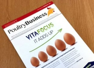 poultry business image
